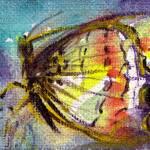"""Magic Butterfly"" by BulganLumini"