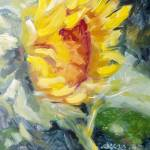 """Texada Sunflower"" by susanejones"