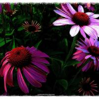 SAY IT WITH FLOWERS Art Prints & Posters by MARCIA BLOCKER
