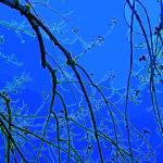 """Promise of Spring in Blue"" by judithschmidt"