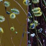 """Willows Abstract 2"" by judithschmidt"