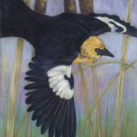 Blackbird and Cattails Art Prints & Posters by Lori Blaylock