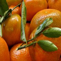 Sweet Tangerines by Patricia Schnepf