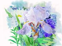 Bouquet with iris and flowers