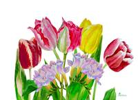Bouquet with tulips and fressia