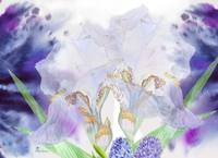 Blue background with white  irises
