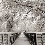"""Bridge Through Winter"" by Lorraine_Sommer"
