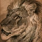 """Dignity: A Lion Portrait"" by WilshireImages"