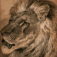 Dignity: A Lion Portrait Art Prints & Posters by Phil Cardamone