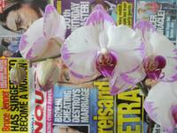 Phaleonopsis Orchid - White and Pink