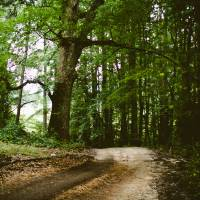Path In The Woods Art Prints & Posters by Kevin G