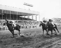 Continuous Count Vintage Horse Racing