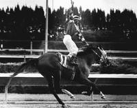 Scat Dancer Horse Racing Vintage