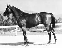 Seabiscuit Horse Racing #2
