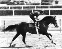 Seattle Slew Horse Racing #02