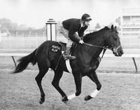 Seattle Slew Horse Racing #03