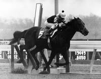 Seattle Slew Horse Racing #05