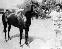 Seattle Slew Horse Racing #07