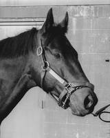 Seattle Slew Horse Racing #10