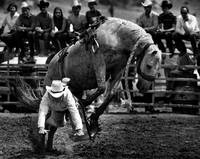 Cowboy gets bucked off
