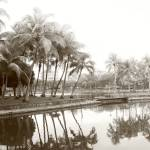 """Original Monochrome - tropic coconut tree"" by sghomedeco"