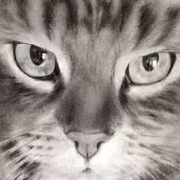 Puddy Tat Art Prints & Posters by Lyn Banks