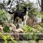 """Terrier Standing Guard"" by susansartgallery"