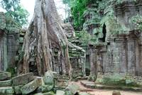 Overgrown Trees in Ta Prohm Temple Cambodia
