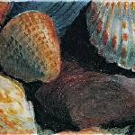 """First Shells"" by Glenda"