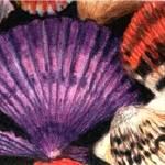 """Paradise Shells"" by Glenda"