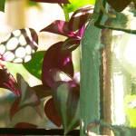 """Starting Plants"" by kcam"