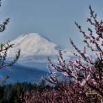 """Mt. Adams in Spring"" by boppintheblues"