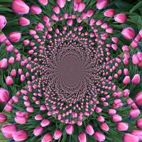 Endless Pink Tulips Kaleidoscope