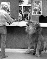 Vintage Circus lion at the bank