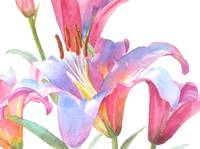 Lily Painting, July 2013 - Copy, cropped for close