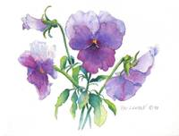 Pansy Painting, with Sig