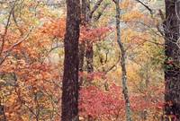 Fall in the Ozarks 2