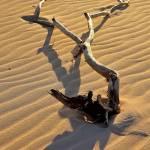"""Beach Driftwood"" by brianraggatt"
