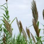 """Long Grasses"" by GlendinePhotography"