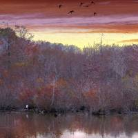 sunset fall stumpy lake Art Prints & Posters by Nancie Laing