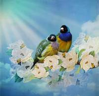 Mr and Mrs Gouldian Finch