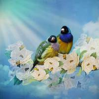 Mr and Mrs Gouldian Finch Art Prints & Posters by Tina Lindsay