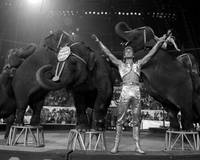Vintage Circus Elephants showcase skills