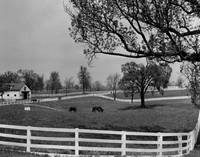 Kentucky Bluegrass Horse Racing Farm