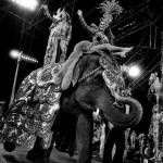 """Circus Elephant"" by RetroImagesArchive"
