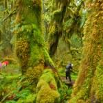 """In a Rainforest Photographer"