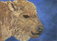 Bison Calf in Blue