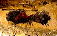 2 Buffalo Lascaux Cave SE France Cropped