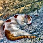 """Street cat"" by who"