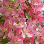 """""""Spring Beauty"""" by vpicks"""
